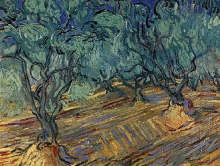 Olive Grove: Bright Blue Sky