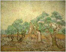 Olive Picking (1)