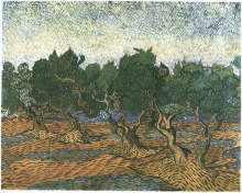 Olive Grove (3)